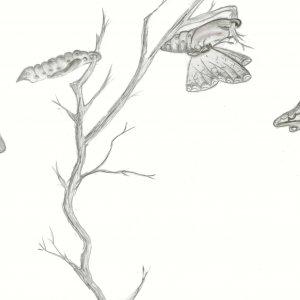 Graphite Drawing by Maureen Cummings