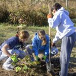 oak knoll students performing community service